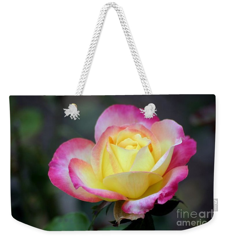 Roses Weekender Tote Bag featuring the photograph Love And Peace by Living Color Photography Lorraine Lynch