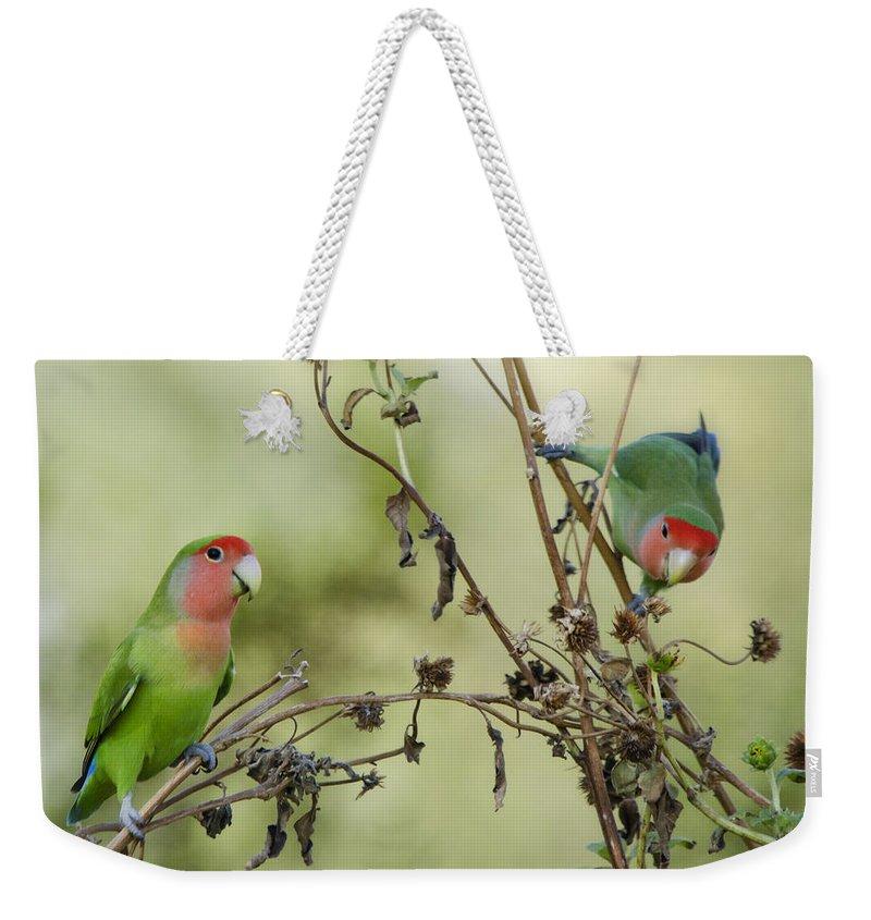 Lovebirds Weekender Tote Bag featuring the photograph Lovebirds At Play by Saija Lehtonen