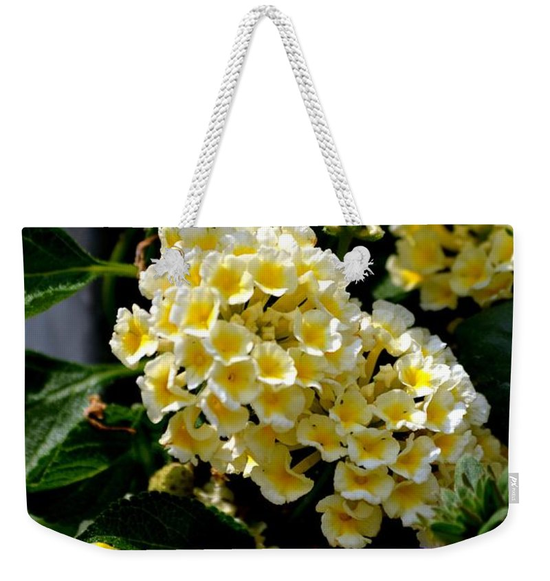 Loving Weekender Tote Bag featuring the photograph Loving Yellow by Maria Urso