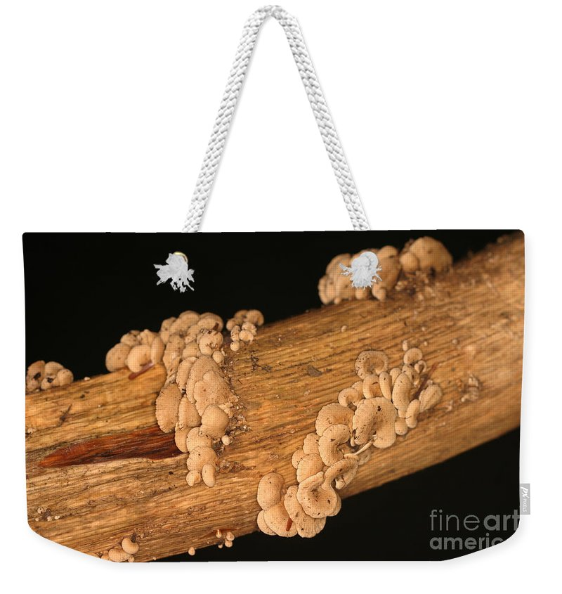 Luminescent Weekender Tote Bag featuring the photograph Luminescent Mushroom Panellus Stipticus by Ted Kinsman