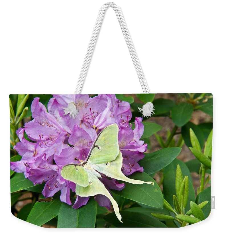 Rhododendron Weekender Tote Bag featuring the photograph Luna Moth On Rhododendron 1 by Douglas Barnett
