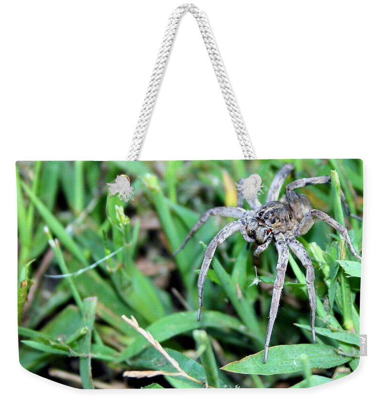 Spider Weekender Tote Bag featuring the photograph Lurking Spider In The Grass by Kristin Elmquist