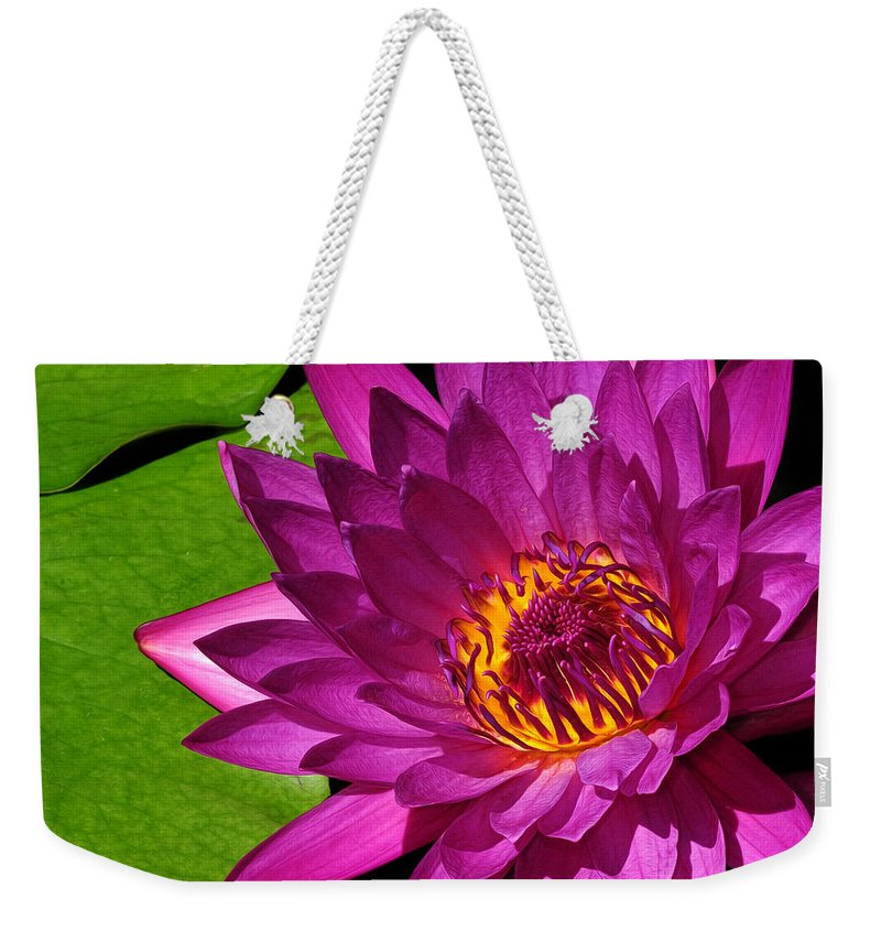 Magenta Weekender Tote Bag featuring the photograph Magenta Waterlily by Dave Mills