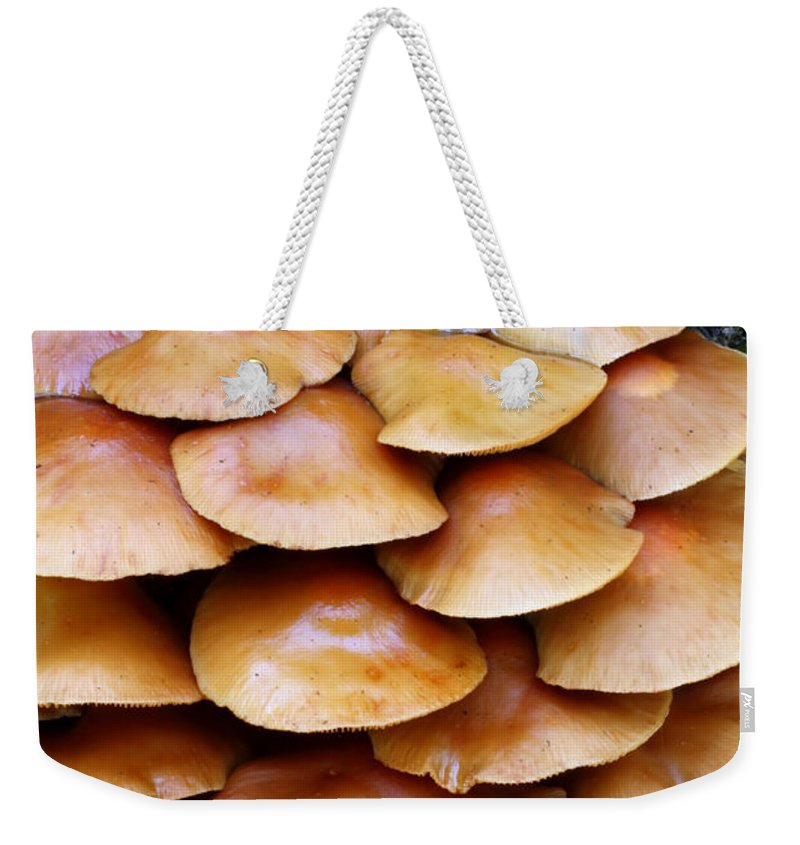 Doug Lloyd Weekender Tote Bag featuring the photograph Magic Shelf by Doug Lloyd