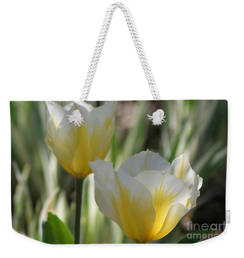 Tulips Weekender Tote Bag featuring the photograph Magical Morning by Living Color Photography Lorraine Lynch