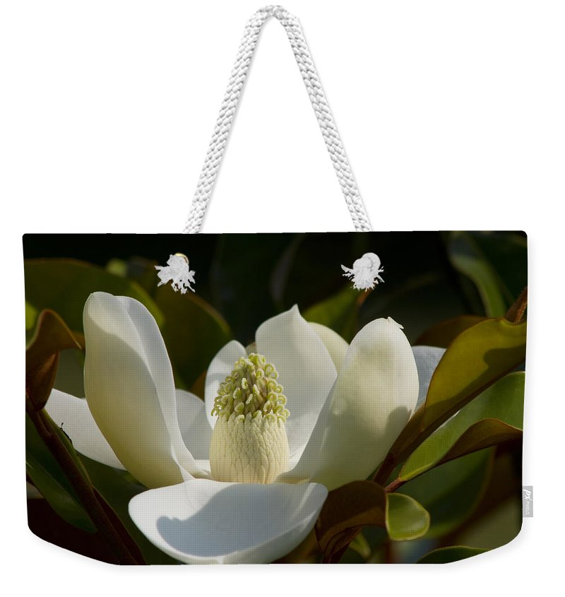 Magnolia Macrophylla Weekender Tote Bag featuring the photograph Magnificent Alabama Magnolia Blossom by Kathy Clark