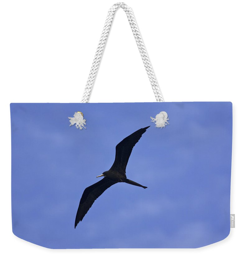 Photography Weekender Tote Bag featuring the photograph Magnificent Frigatebird In Flight by Tim Laman