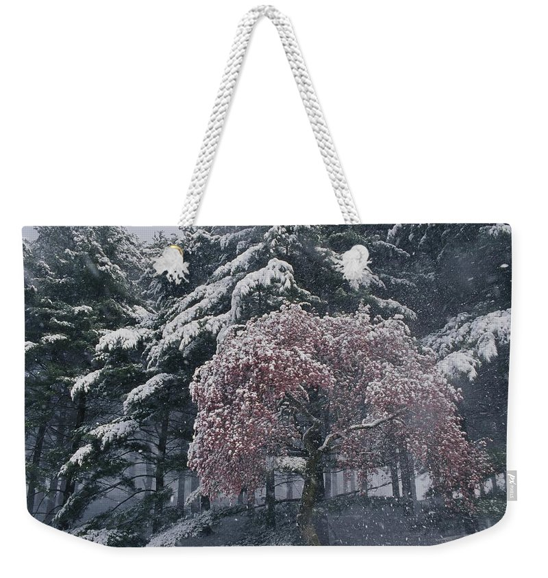 Winterthur Gardens Weekender Tote Bag featuring the photograph Magnolia Blossoms And Conifers by Jonathan Blair