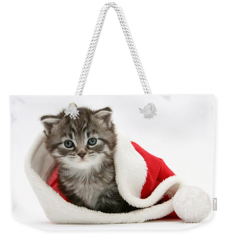 Animal Weekender Tote Bag featuring the photograph Maine Coon Kitten by Mark Taylor