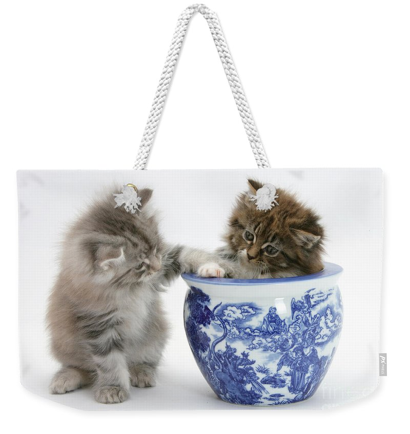 Animal Weekender Tote Bag featuring the photograph Maine Coon Kittens by Mark Taylor