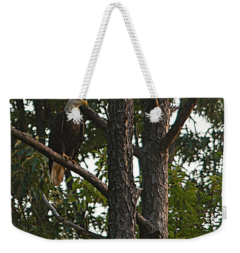 All Rights Reserved Weekender Tote Bag featuring the photograph Majestic Bald Eagle by Clayton Bruster