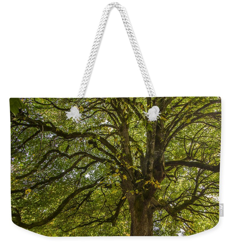 Tree Weekender Tote Bag featuring the photograph Majestic Tree by Jean Noren