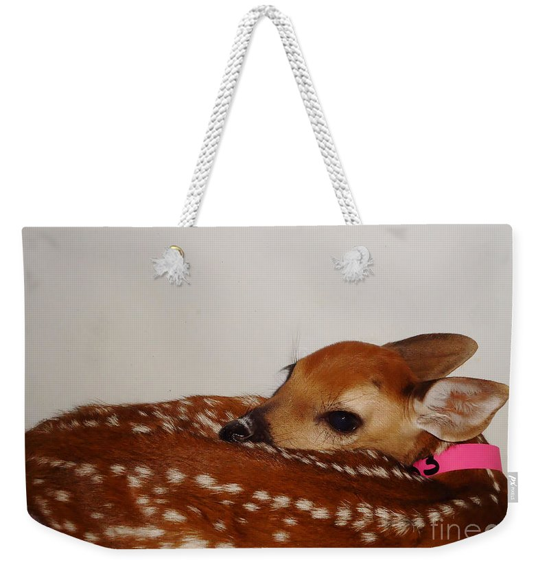 Deer Photographs Weekender Tote Bag featuring the photograph Make Maybelline Jealous by Art Dingo