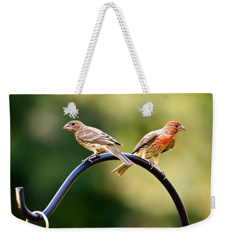 Female House Finch Weekender Tote Bag featuring the photograph Male And Female House Finch by Linda Tiepelman