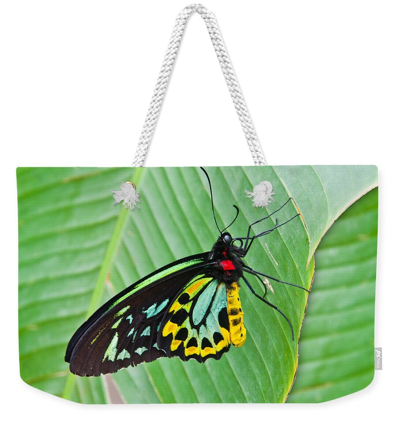 Male Cairns Birdwing Butterfly Weekender Tote Bag featuring the photograph Male Cairns-birdwing Butterfly by Chris Thaxter