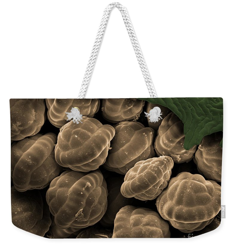 Botany Weekender Tote Bag featuring the photograph Male Fern Sporangia, Sem by Ted Kinsman