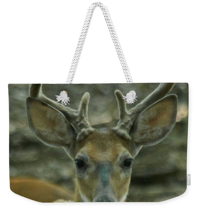 Animal Weekender Tote Bag featuring the photograph Male Whitetail 9269 4059 by Michael Peychich