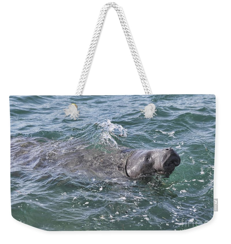 Manatee Weekender Tote Bag featuring the photograph Manatee At Ponce Inlet by Deborah Benoit