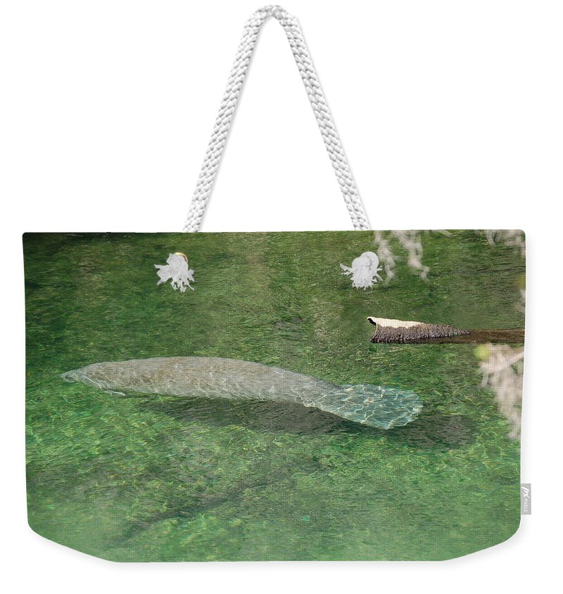 Manatee Weekender Tote Bag featuring the photograph Manatee by Randy J Heath