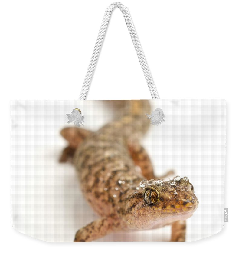 Christinus Mamoratus Weekender Tote Bag featuring the photograph Marbled Gecko Sitting In Studio Looking by Brooke Whatnall