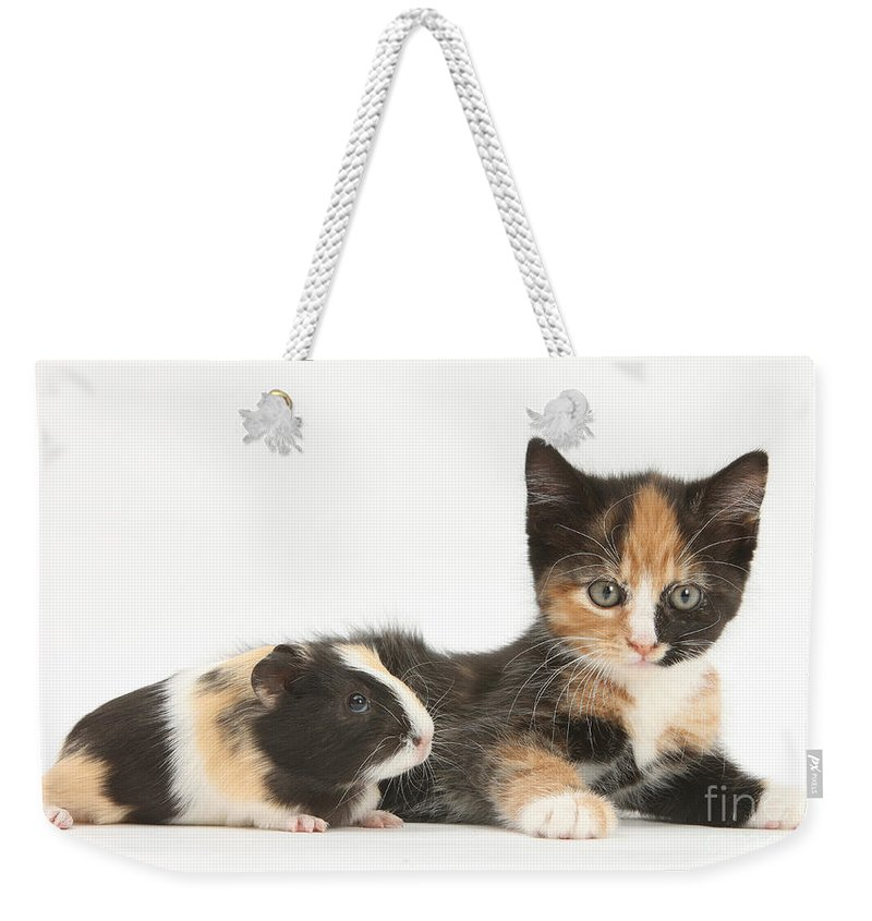 Animal Weekender Tote Bag featuring the photograph Matching Kitten & Guinea Pig by Mark Taylor