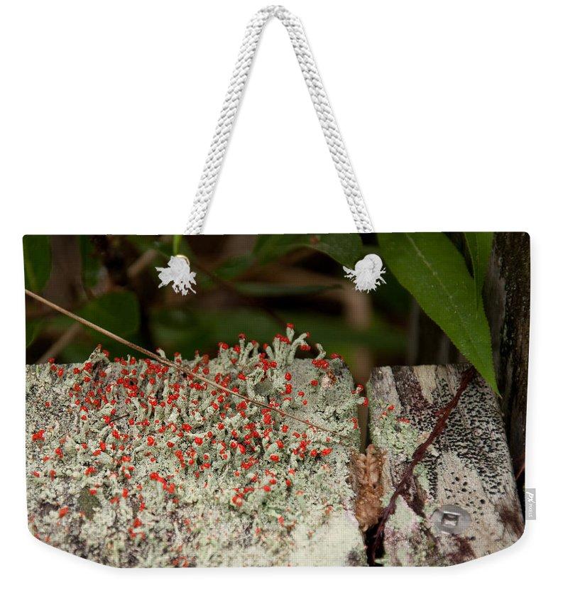 Matchstick Lichen Weekender Tote Bag featuring the photograph Matchstick Lichen by Christine Stonebridge