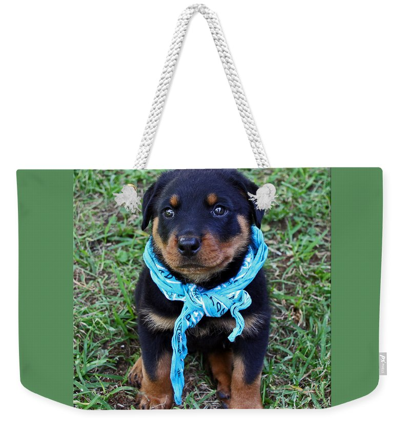 Rottweiler Weekender Tote Bag featuring the photograph Maxx by Rebecca Morgan