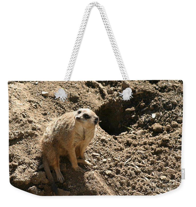 Nature Weekender Tote Bag featuring the photograph Meerkat by Henrik Lehnerer