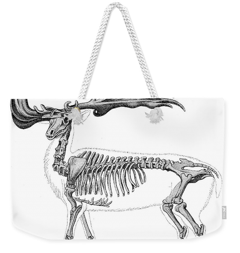 Prehistory Weekender Tote Bag featuring the photograph Megaloceros, Cenozoic Mammal by Science Source