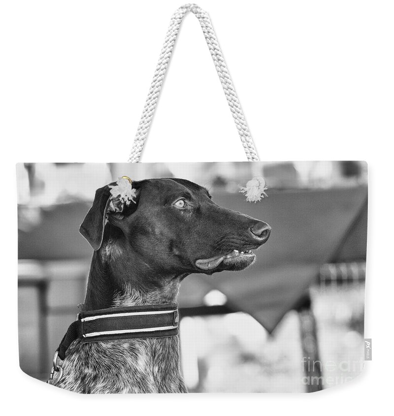 Dog Weekender Tote Bag featuring the photograph Mesmerized by Eunice Gibb