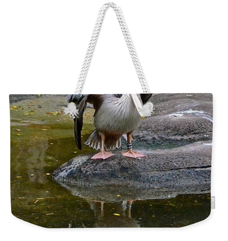 Pelican Weekender Tote Bag featuring the photograph Mirror Image by Carol Bradley