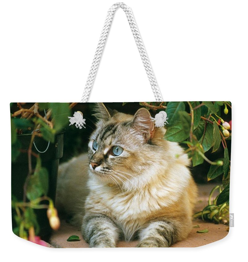 Mixed Breed Cat Weekender Tote Bag featuring the photograph Mixed Breed Cat--mia by Larry Allan
