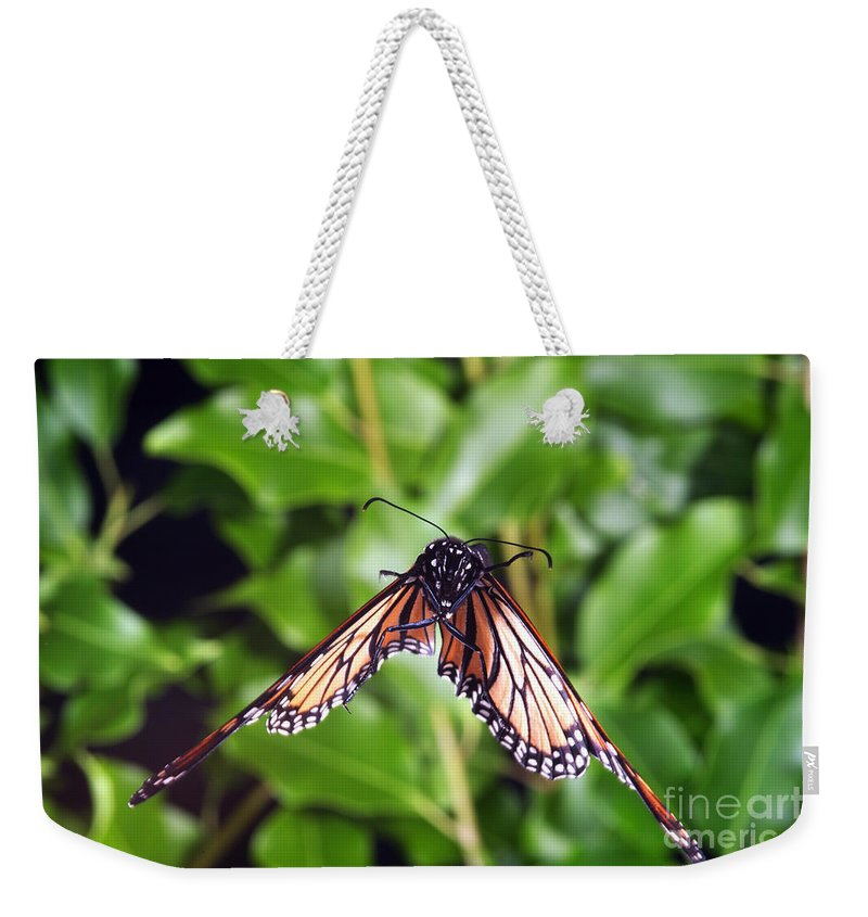 Animal Weekender Tote Bag featuring the photograph Monarch Butterfly In Flight by Ted Kinsman