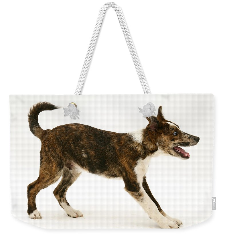 Animal Weekender Tote Bag featuring the photograph Mongrel Pup by Mark Taylor
