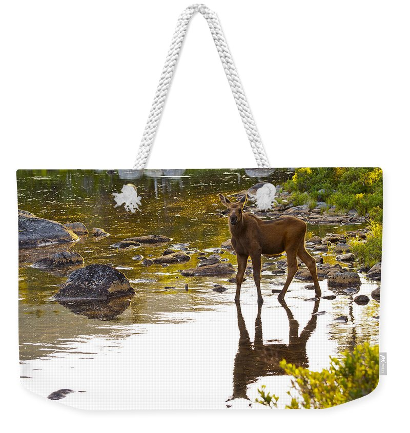Moose Weekender Tote Bag featuring the photograph Moose Baby 2 by Glenn Gordon