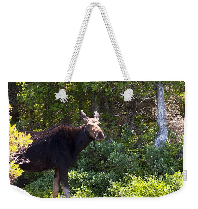 Moose Weekender Tote Bag featuring the photograph Moose Baxter State Park 4 by Glenn Gordon