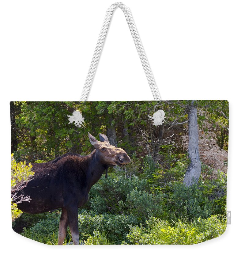 Moose Weekender Tote Bag featuring the photograph Moose Baxter State Park Maine 3 by Glenn Gordon