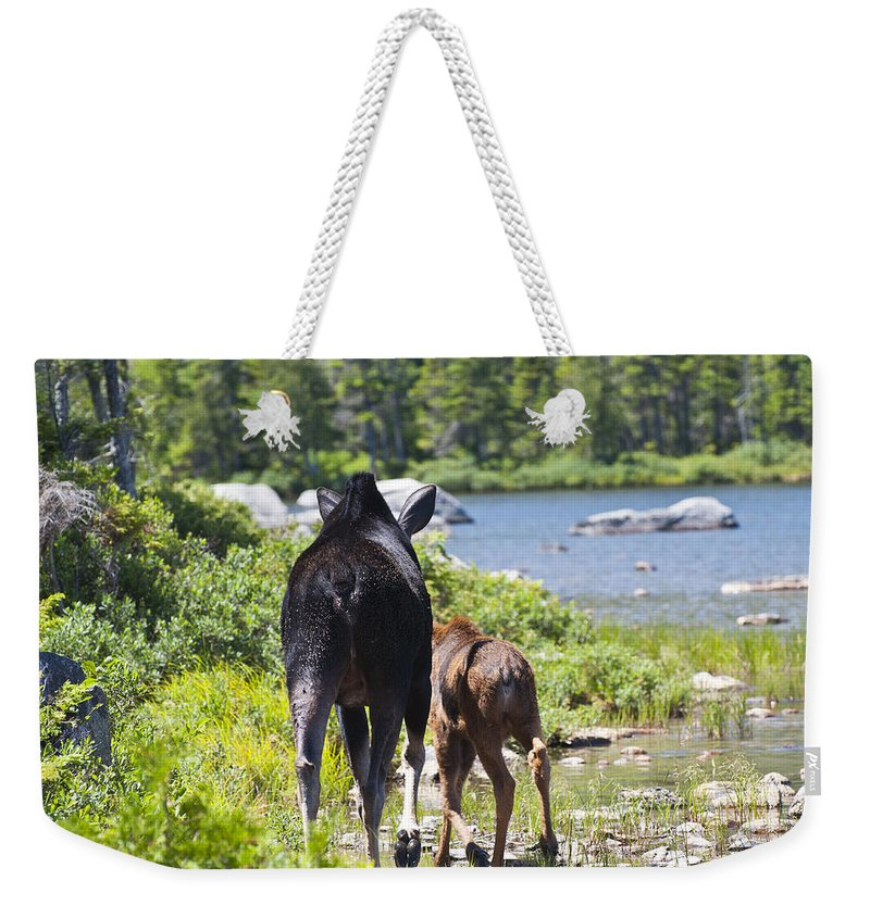 Moose Weekender Tote Bag featuring the photograph Moose Ends Baxter State Park Maine by Glenn Gordon