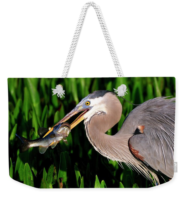 Gret Blue Heron Weekender Tote Bag featuring the photograph Morning Fishing by Bill Dodsworth