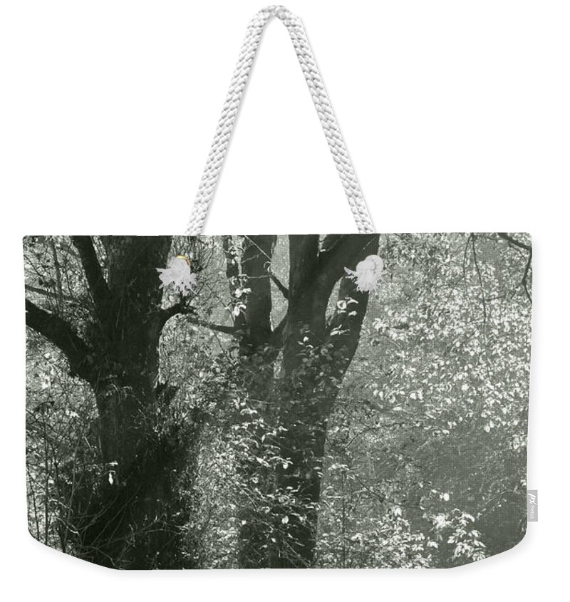 Trees Weekender Tote Bag featuring the photograph Morning Light by Kathleen Grace