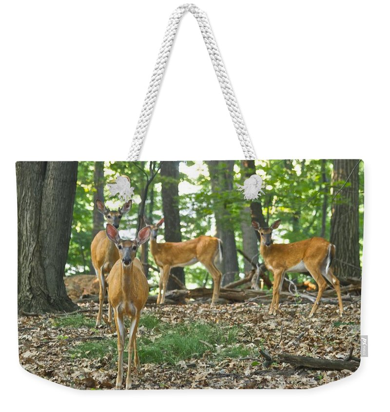 Deer Weekender Tote Bag featuring the photograph Morning Stroll 7717 by Michael Peychich