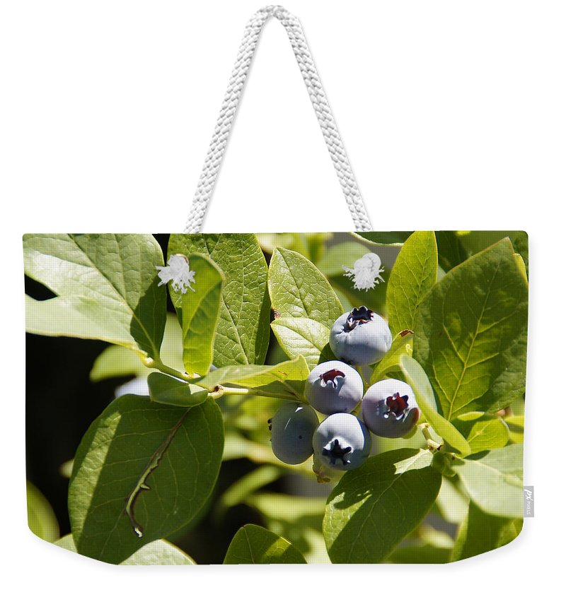 Blueberries Weekender Tote Bag featuring the photograph Morning Sun On Blueberries by Mick Anderson