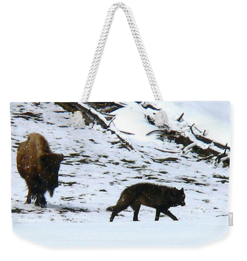 Yellowstone National Park Weekender Tote Bag featuring the photograph Mortal Enemies by Eric Tressler