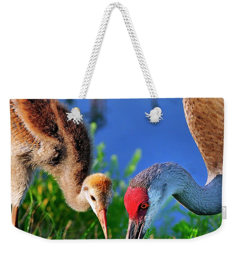 Mother Weekender Tote Bag featuring the photograph Mother And Young Sandhill Crane by Bill Dodsworth