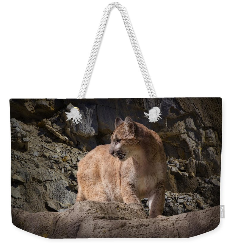 Art Weekender Tote Bag featuring the photograph Mountain Lion on the Prowl by Randall Nyhof
