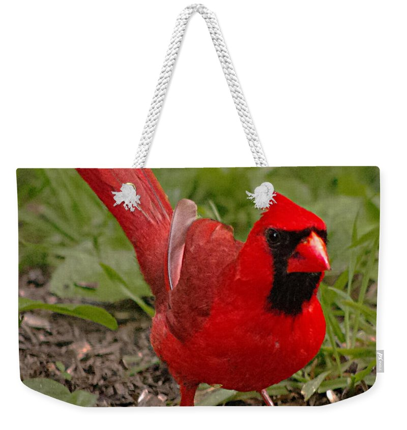 Young Male Cardinals Have The Most Brilliant Colors In The Spring. Weekender Tote Bag featuring the photograph Mr. Obvious by Jenny Gandert