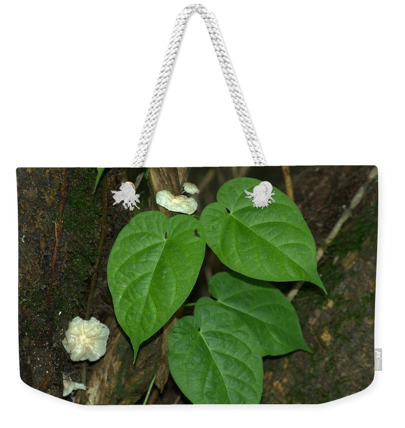 Wood Weekender Tote Bag featuring the photograph Mushroom Between The Leaves by Donna Brown