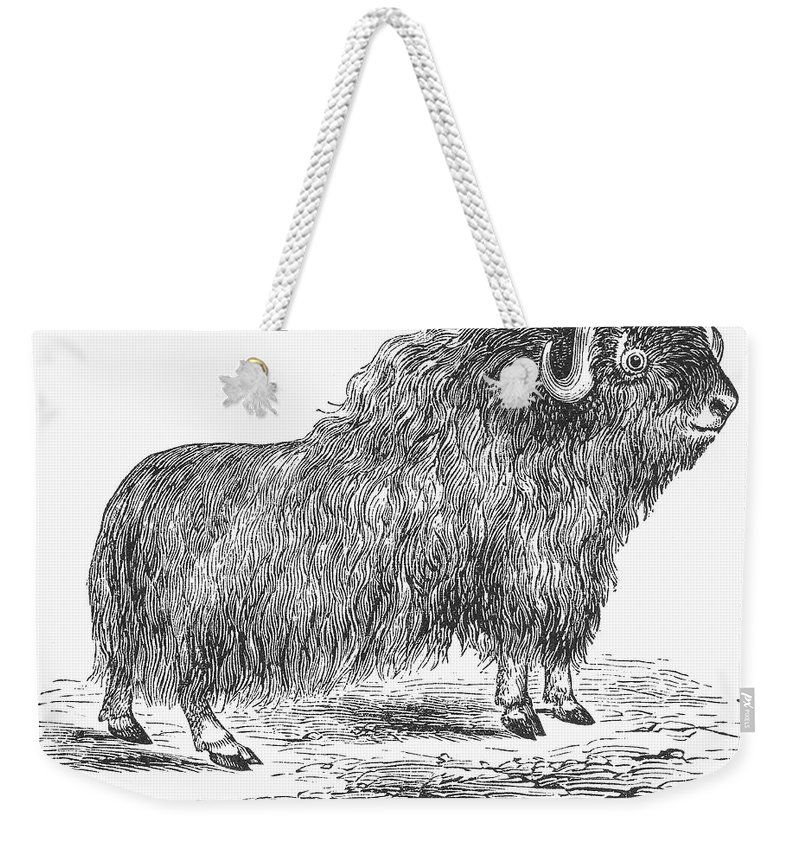 19th Century Weekender Tote Bag featuring the photograph Musk Ox by Granger