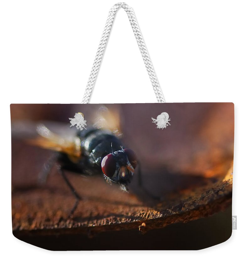Nature Weekender Tote Bag featuring the photograph My My My Little Fly by Susan Capuano