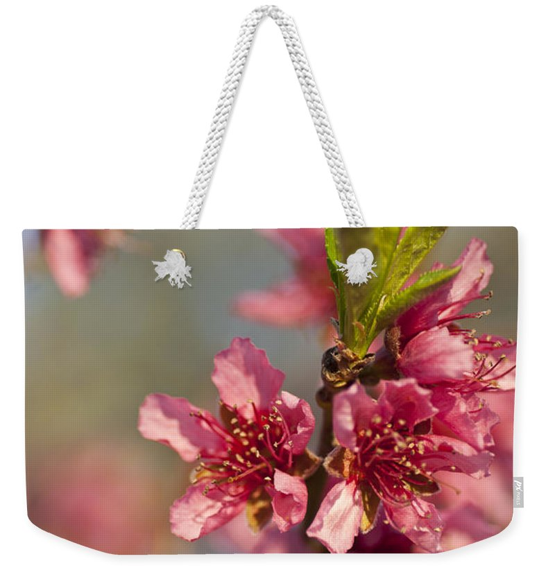 Nectarine Weekender Tote Bag featuring the photograph Nectarine Blossoms by Jim And Emily Bush